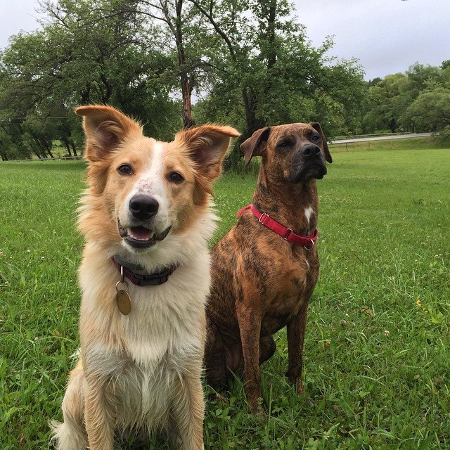 BOARDING & DAYCARE - Hounds on the Hudson